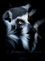 1st - Black, White and Yellow by Jeanann Wieners (Professional - Color)