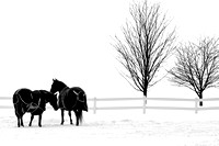 Two Horses, Two Trees